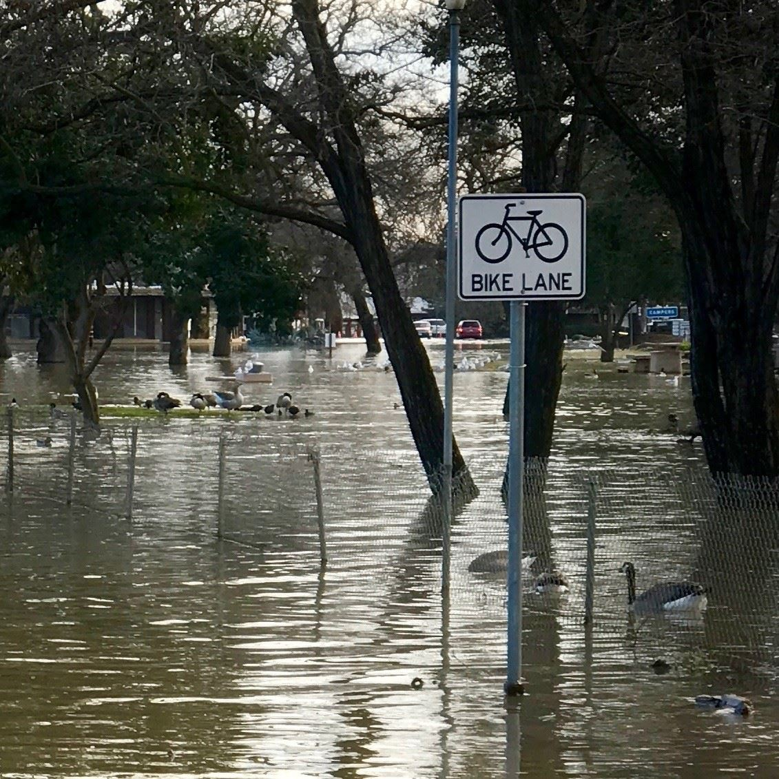 Bike lane sign standing in several feet of water.